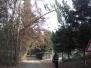 Nagnjeno drevo