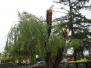 Odstranjevanje veje - vrtec