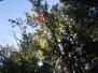Reševanje mačke z drevesa